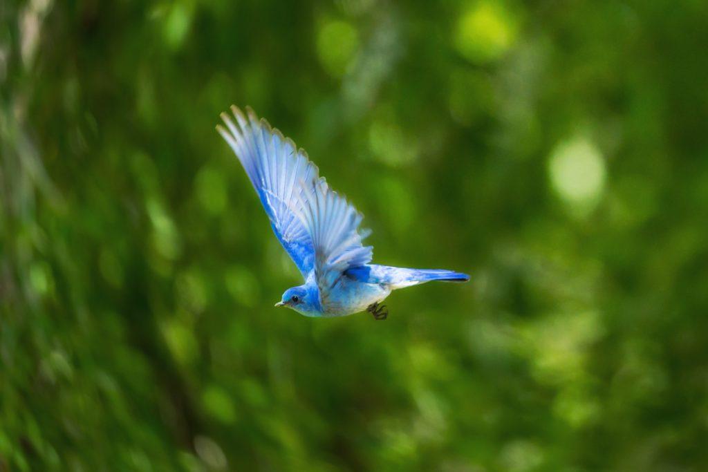 Rechtenvrije foto van vogel door Andrea Reiman via Unsplash voor bij het artikel over de Twitter statistieken 2017.